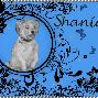 Shania begging