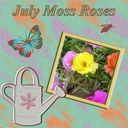 July Moss Roses