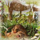 Friday Fantasy The Elf and the Dormouse