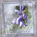 Floral Alpha Bluebell