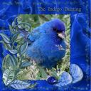 Indigo Bunting.craft
