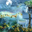 Land of Unicorns