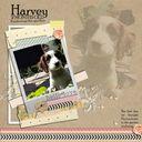 Harvey, 2 months old