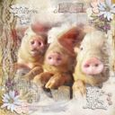 Three Little Pigs...
