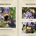 It's all about the bees! - The Brambles Journal