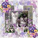 Kittens in pansies
