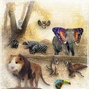 Strange Zoo